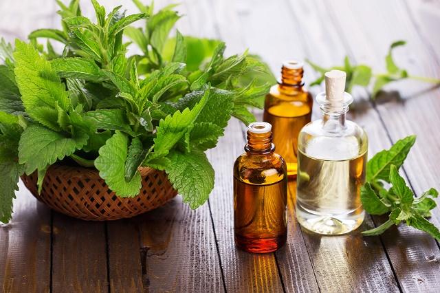 Folhas de hortelã e óleos