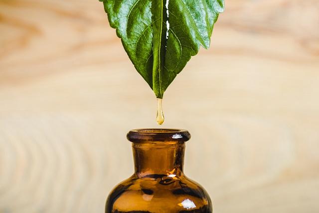 Folha pingando óleo de copaíba