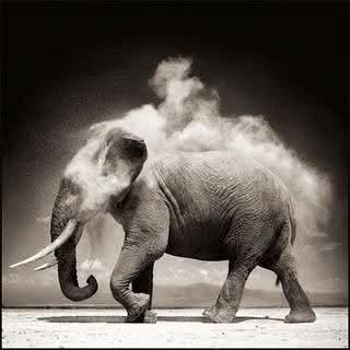 Elefante, um ser com uma memória espacial sem igual