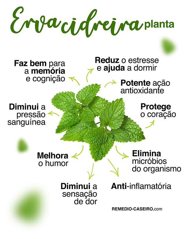 Erva cidreira: benefícios do chá e como fazer