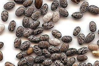Chia, a semente que beneficiará sua saúde