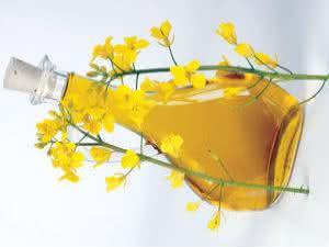 Você conhece os benefícios do óleo de canola?