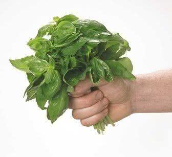 Alfavaca - planta