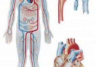 Previna e trate a má circulação do sangue de forma natural!