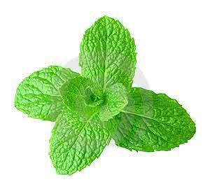 Veja os benefícios desta erva e de seu chá