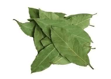Folhas de louro