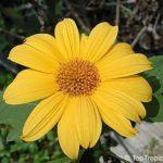 Mão de Deus – Usos benéficos dessa planta