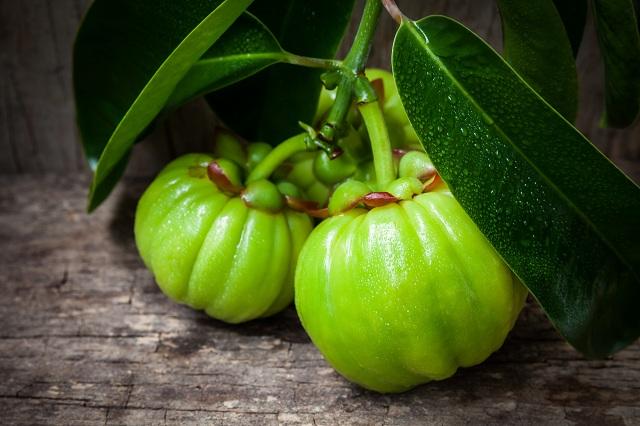 Frutos de garcínia cambogia