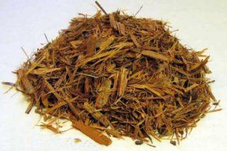 Propriedades e efeitos da catuaba e seu chá