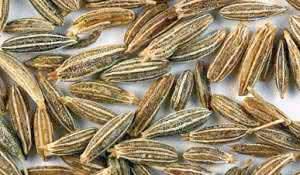 sementes-de-cominho