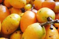 Os benefícios e propriedades do delicioso cajá