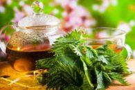 Chá de urtiga – Benefícios e propriedades