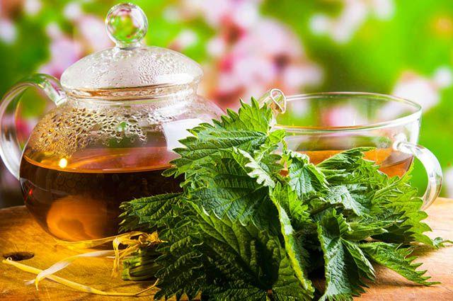 Xícara com chá de urtiga
