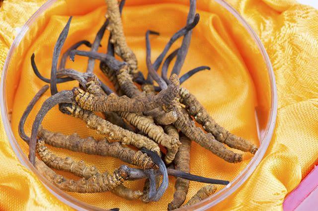 O Cordyceps sinensis cresce em larvas de lagarta
