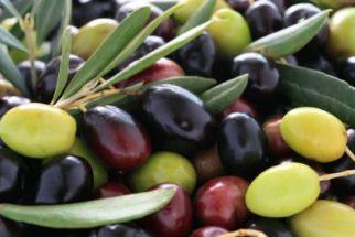 Benefícios da azeitona e modos de consumo