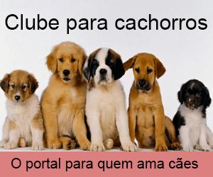 Fotos Pug
