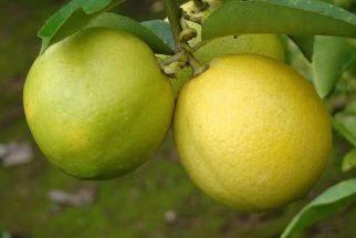 Benefícios e propriedades da lima