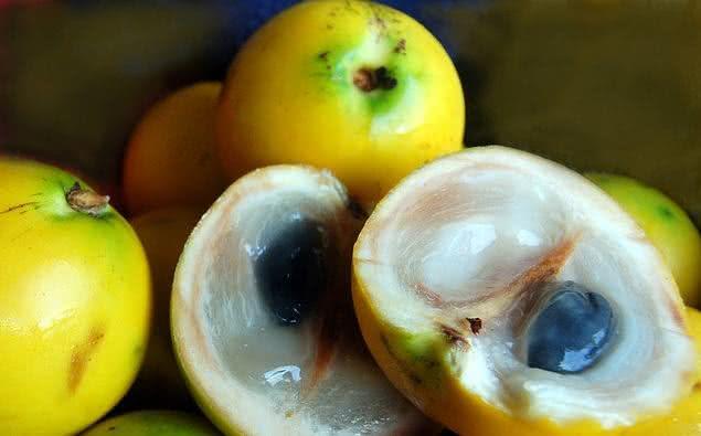 Abiu é uma fruta que ajuda na pneumonia