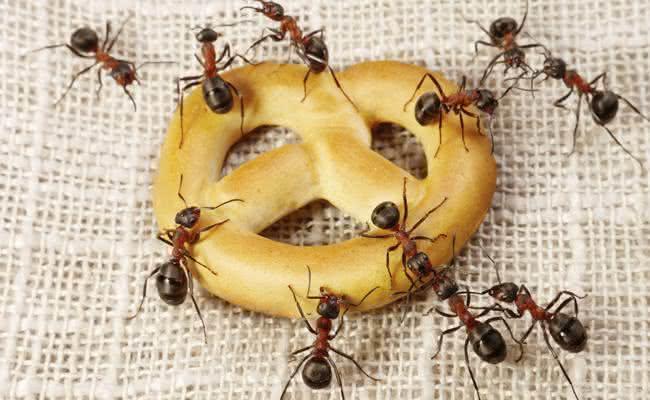 Remédios caseiros para acabar com as formigas