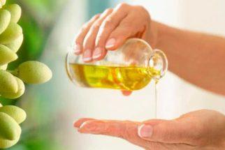 Óleo de neem para pulgas e carrapatos