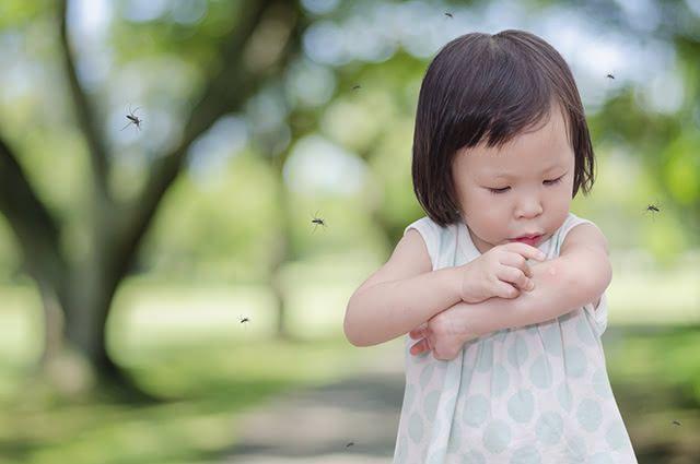 No ato da picada, o mosquito injeta uma substância anticoagulante que irrita a pele