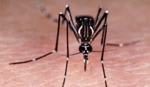 remedio-caseiro-para-acabar-com-o-mosquito-da-dengue