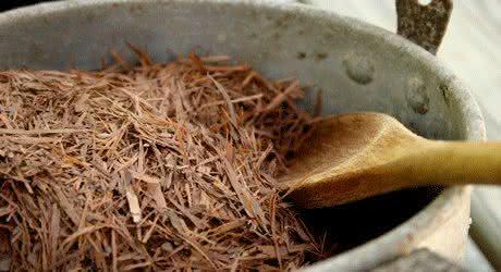 Trate infecções e outros problemas com o chá de pau d'arco