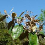 A milagrosa canela de velho: uma aliada contra a artrose
