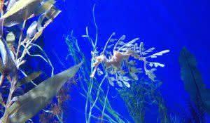 remedios-caseiros-que-vem-do-mar algas