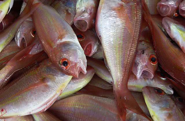 remedios-caseiros-que-vem-do-mar peixe