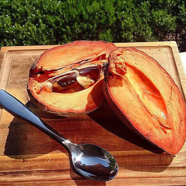 Abricó-do-pará (Mammea americana)