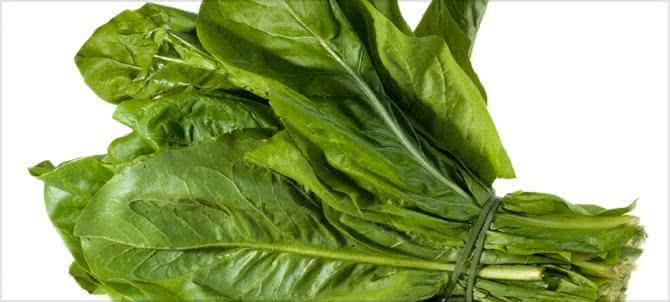 Almeirão: a planta medicinal para revigorar sua saúde