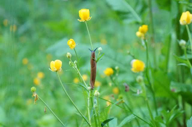 Método caseiro é capaz de acabar com lesmas a caracóis em jardins