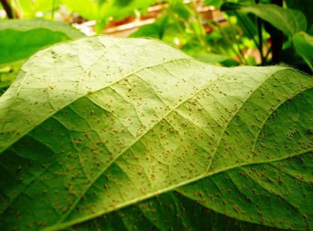 Como preparar um pesticida ecológico para combater pragas em plantas