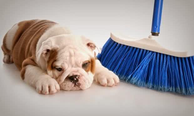 Tire o cheiro de cachorro da casa com receitas caseiras