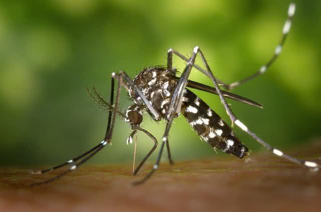 Como tratar em casa os sintomas da febre chikungunya