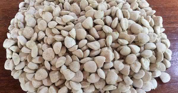 Noz da Índia: benefícios e propriedades desta semente