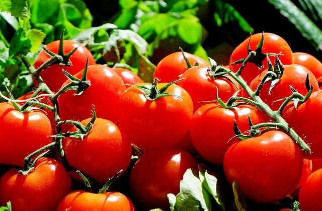 os-alimentos-que-nao-devem-ir-para-geladeira-e-voce-nem-sabia tomate