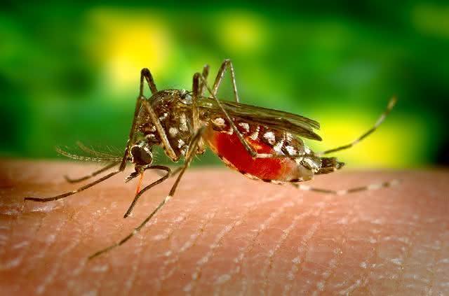 Sintomas da dengue clássica e da hemorrágica