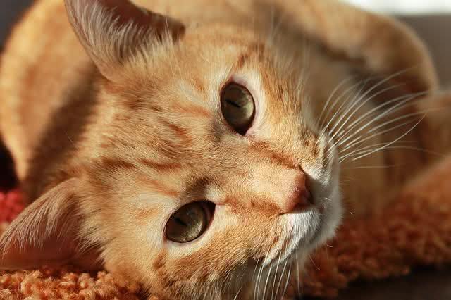 10-utilidades-do-arroz-que-voce-nem-desconfiava-gato
