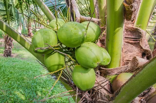 Banho de água de coco é perfeito para rejuvenescer a pele