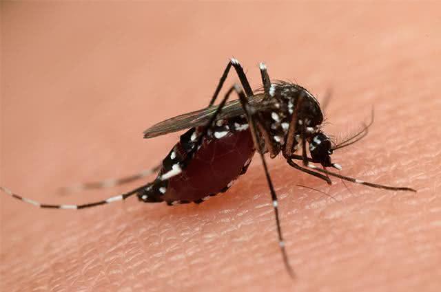 Estudo comprova eficácia de óleos no combate ao mosquito Aedes