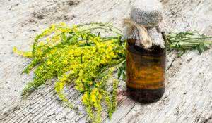 Melilotus officinalis, known as yellow sweet clover, yellow melilot, ribbed melilot, common melilot and pharmaceutical bottle on old wooden table. Used in herbal medicine, as well as pasture or livestock feed, is a major source of nectar
