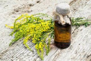 Planta meliloto: propriedades e benefícios para a saúde