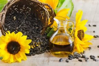 Consumir sementes e brotos pode elevar a expectativa de vida