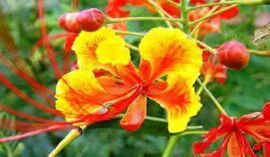 conheca-a-incrivel-planta-que-ao-mesmo-tempo-e-laxante-tonica-e-purgativa