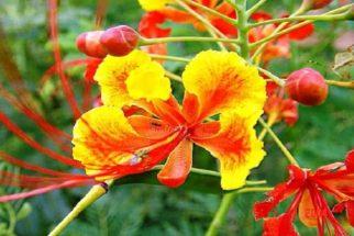 Incrível planta é ao mesmo tempo laxante, tônica e purgativa. Conheça