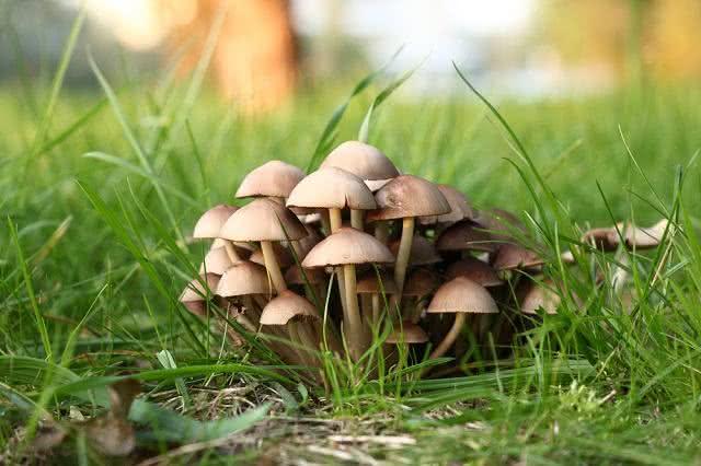 Tipos de cogumelos comestíveis. Conheça seus benefícios