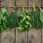 Conheça os benefícios das principais ervas aromáticas