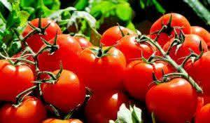 saiba-como-preparar-deliciosos-tomates-assados